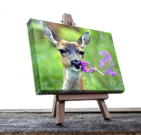 Print your photos on canvas, stretched and ready to mount on the wall