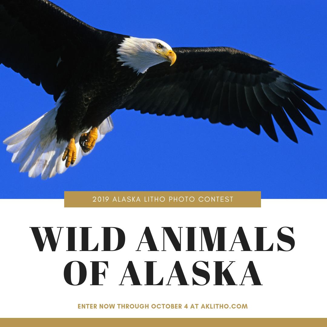 Image: Bald Eagle; Text: 2019 Alaska Litho Photo Contest theme Wild Animals of Alaska Enter now through October 4, 2019.