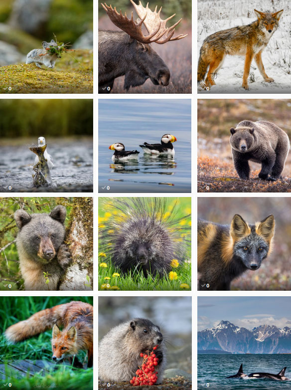 Thumbnails of Top 12 photos to vote on